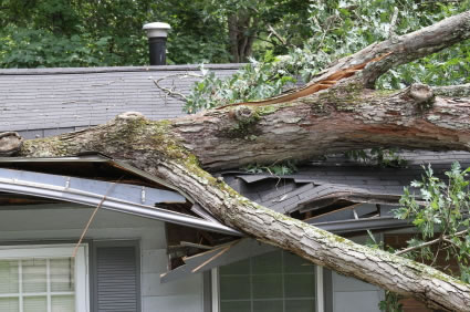 Tree Care Services - Storm Damage