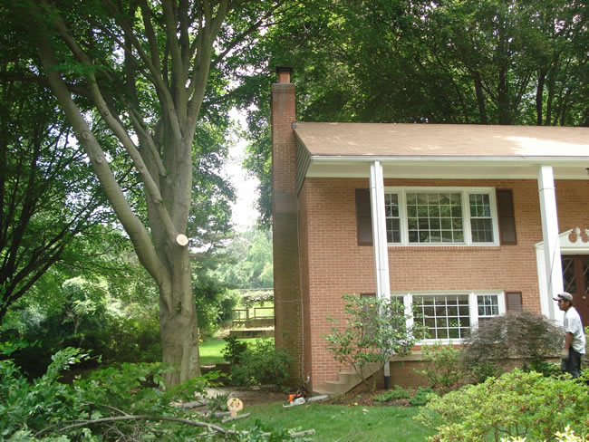 Tree Care/Tree Removal Services