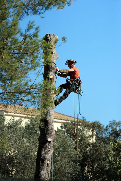 Precision Tree Care Services